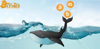 55% lượng Bitcoin trên thế giới đang nằm trong tay các cá voi