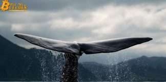 Cá voi vừa chuyển 80 triệu USDT (4% nguồn cung) lên sàn Binance