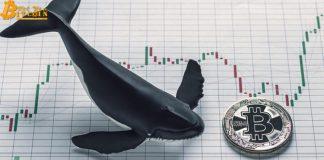 Cá voi Bitcoin động mạnh: 200 triệu USD BTC luân chuyển trong tuần
