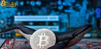 """Reuters: Một """"nhà đầu tư bí ẩn"""" đã mua 20.000 BTC, đẩy giá Bitcoin lên lại mức $5,000"""