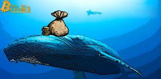Giá BTC tăng hơn 8.800 USD, cá voi Bitcoin đang thao túng thị trường?