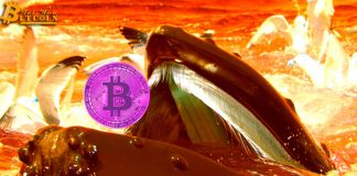 Cá voi Bitcoin đánh cược với CEO Binance về triển vọng tăng giá