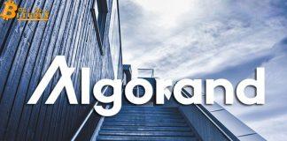 Algorand tăng giá khổng lồ sau khi cập nhật giao thức