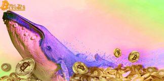 Cá voi vừa dịch chuyển 83 triệu USD giá trị BTC, liệu thị trường sắp có biến động?