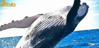Cá voi dịch chuyển 1,2 triệu ETH khi giá Ethereum được dự đoán sớm đạt $220