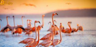 1,6 tỷ đô được khóa trong Flamingo của NEO sau khi ra mắt
